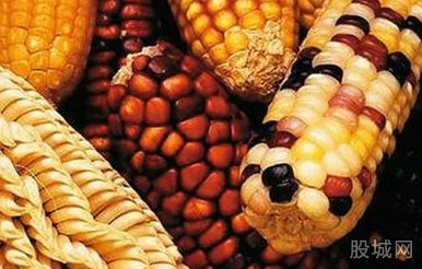 美国转基因玉米