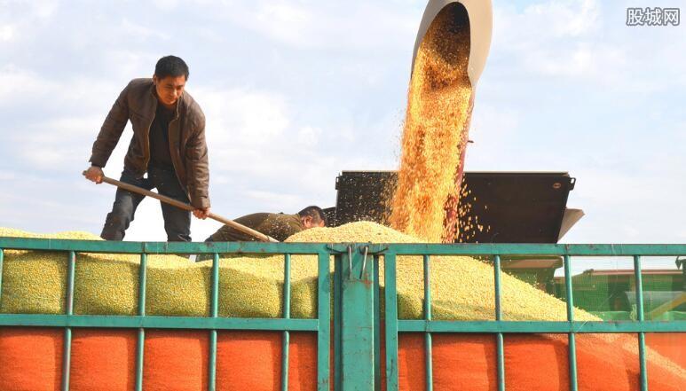 玉米等饲料期货下行原因