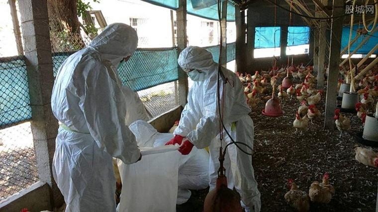 禽流感进入高发期