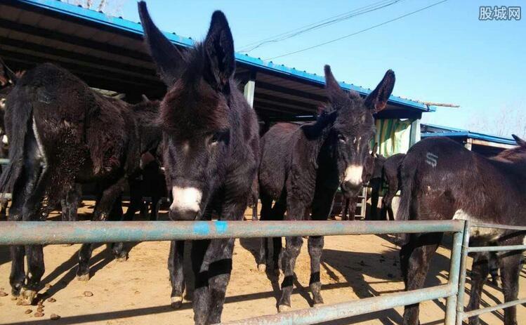 中国消耗驴数量惊人