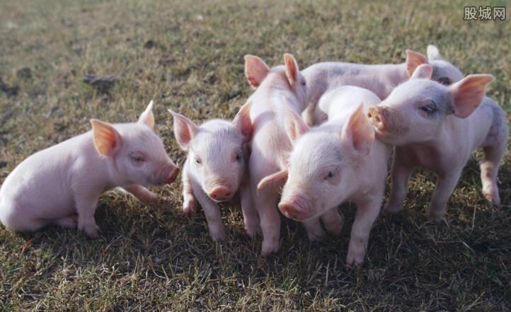 国内生猪价格震荡下跌
