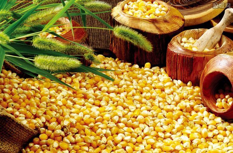 玉米利润回升
