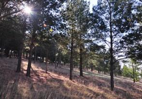 健全完善天然林资源保护和森林生态效益补偿制度
