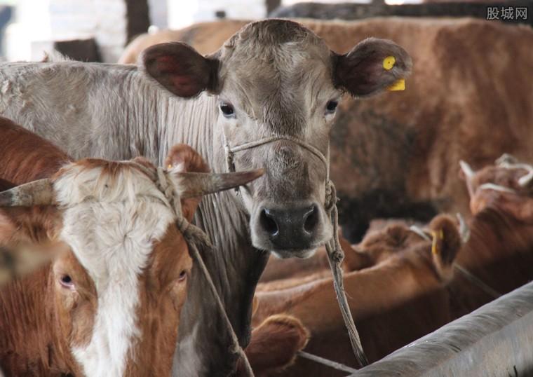 畜牧业处转型升级时期