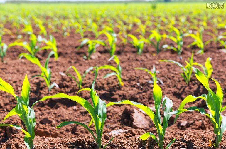 我国大力扶持种子企业