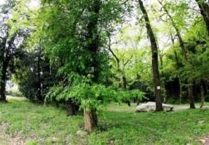 男子发现明代沉木 沉木十分名贵价值2000万