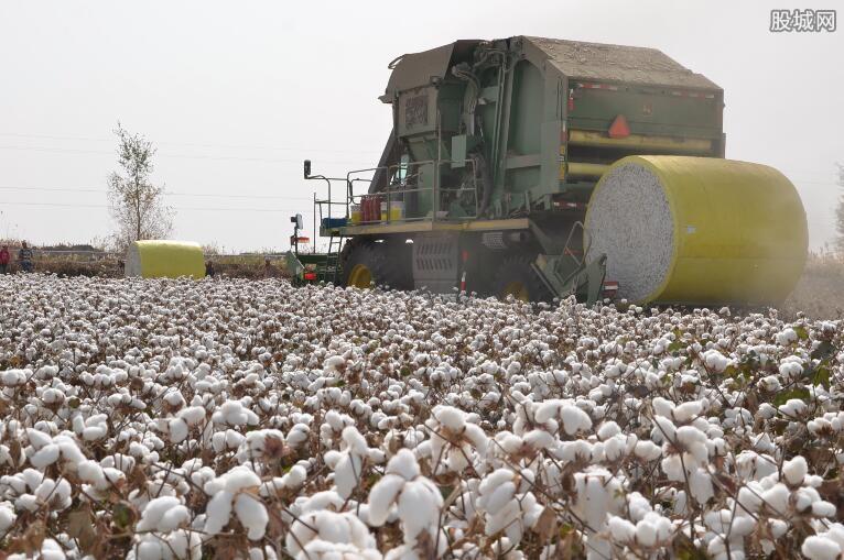 稳定新棉购销市场预期
