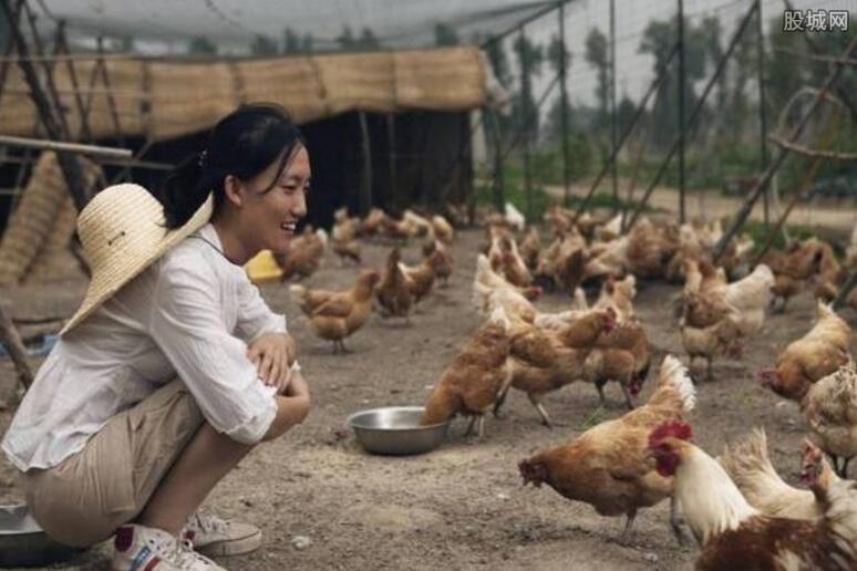 美女博士回京种菜养猪
