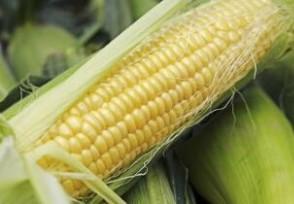 现货玉米价格下跌 2018玉米价格还会涨吗
