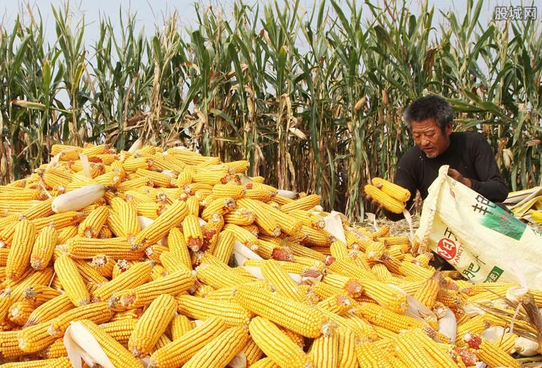 玉米价格行情分析