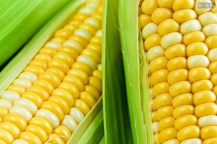 玉米价格反弹
