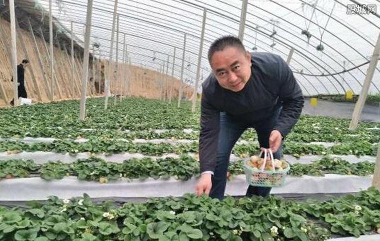 种植草莓赚钱吗