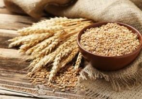 小麦价格下跌 专家分析小麦价格行情或偏弱