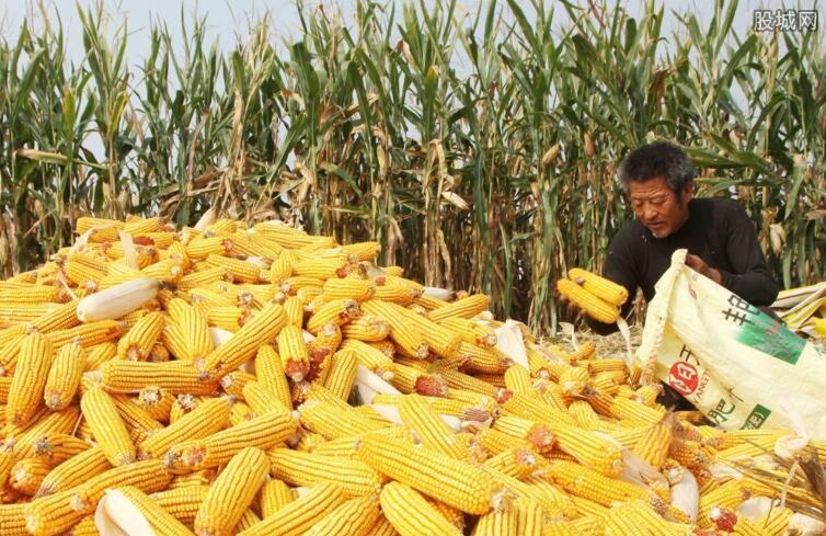 玉米多少钱一斤