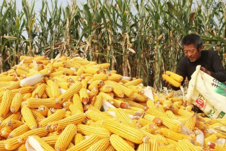 我国玉米交易市场