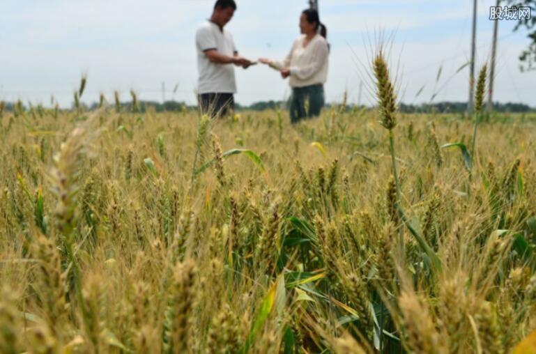 夏季粮油有望再获丰收