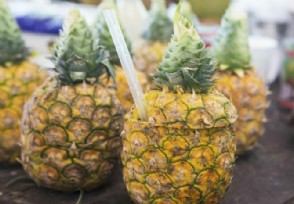 徐闻菠萝滞销 造成菠萝寒冬期的主要原因是什么?