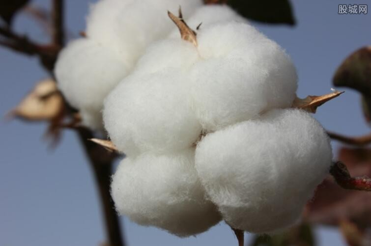 棉花期货行情分析 棉花价格有望进入上升通道