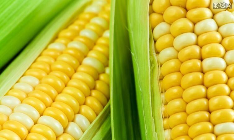 玉米2018最新行情