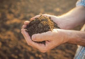 大量稀土品种报价上调 镨钕价格再度上扬