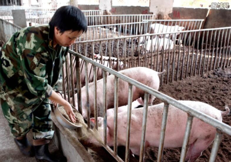 生猪价格创新低