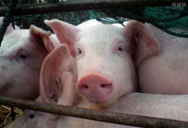 猪价上涨下跌趋势