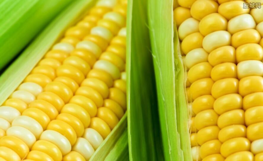 玉米收购价格持续下滑