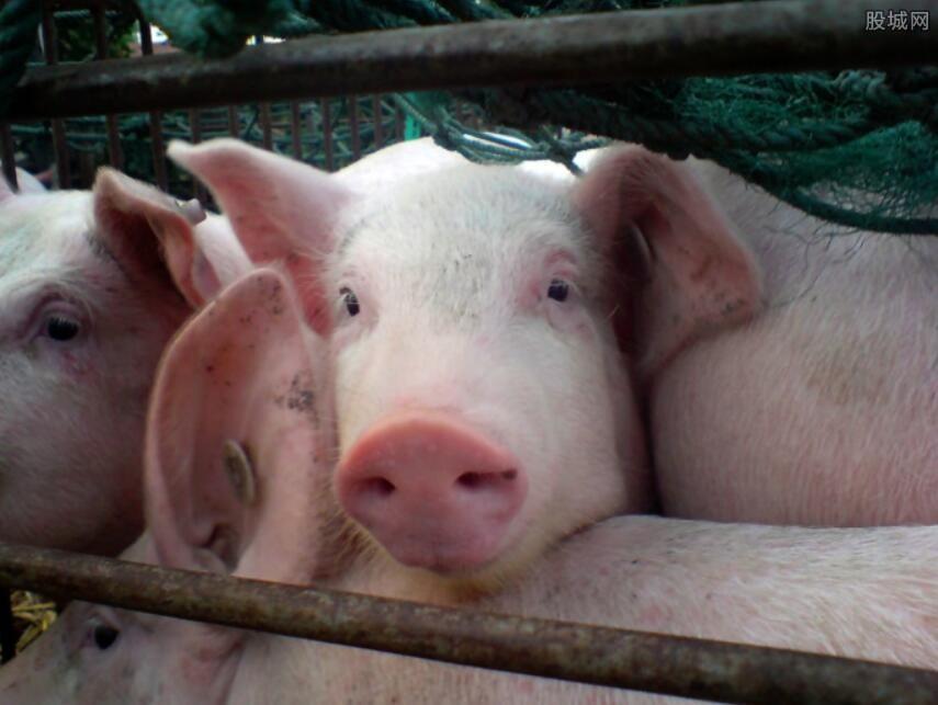 生猪价格上涨动力不足