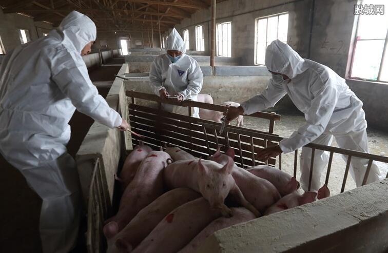 河南郑州非洲猪瘟疫