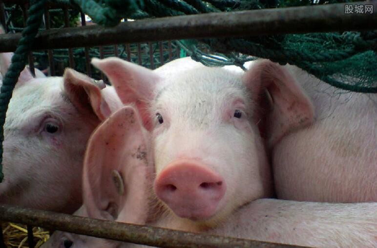 非洲猪瘟疫情无害化处理