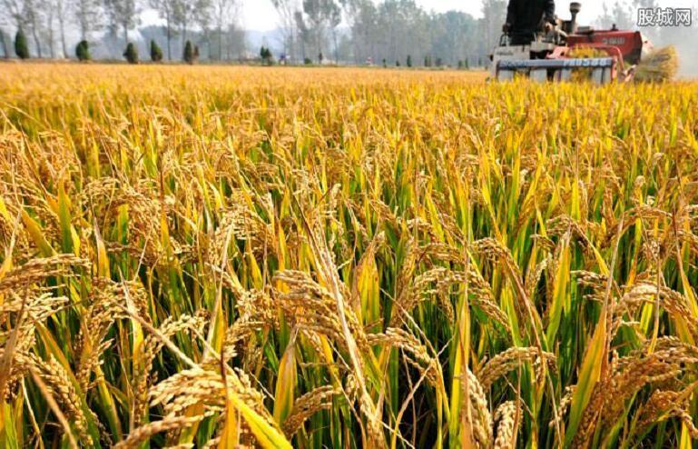 气候变化影响粮食供应