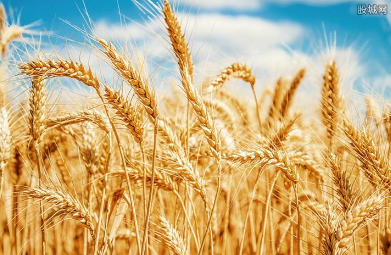 促进小麦早出苗