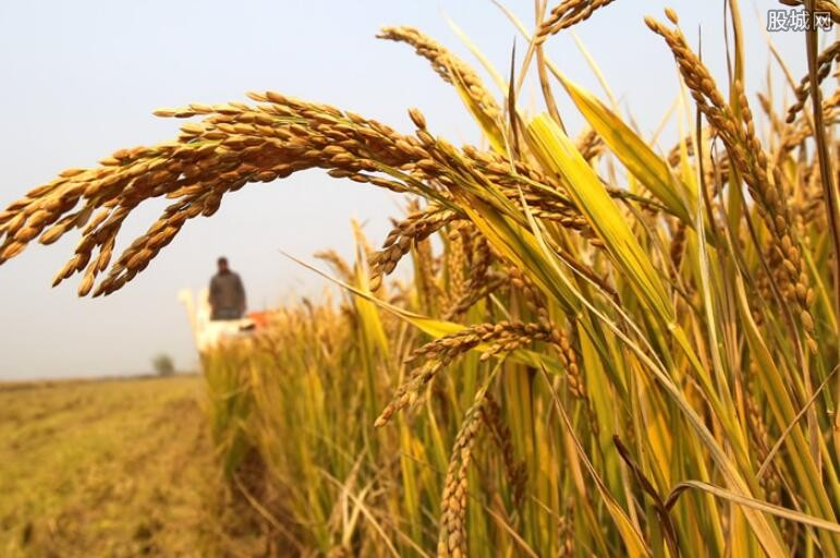 山西农业结构调整