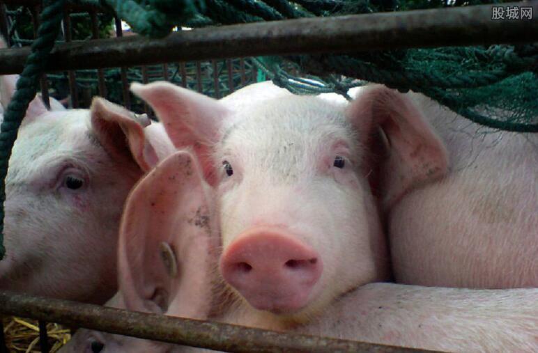 非洲猪瘟疫情处置措施