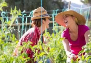 农村种植什么最赚钱 农村最有前景的种植