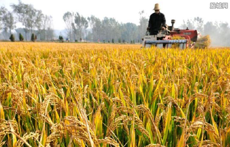 今年稻米产量或创新高