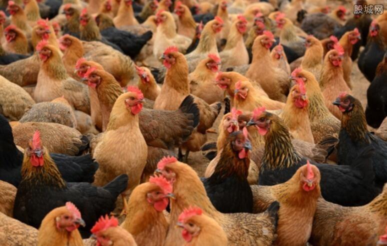 江苏规模畜禽产业产值