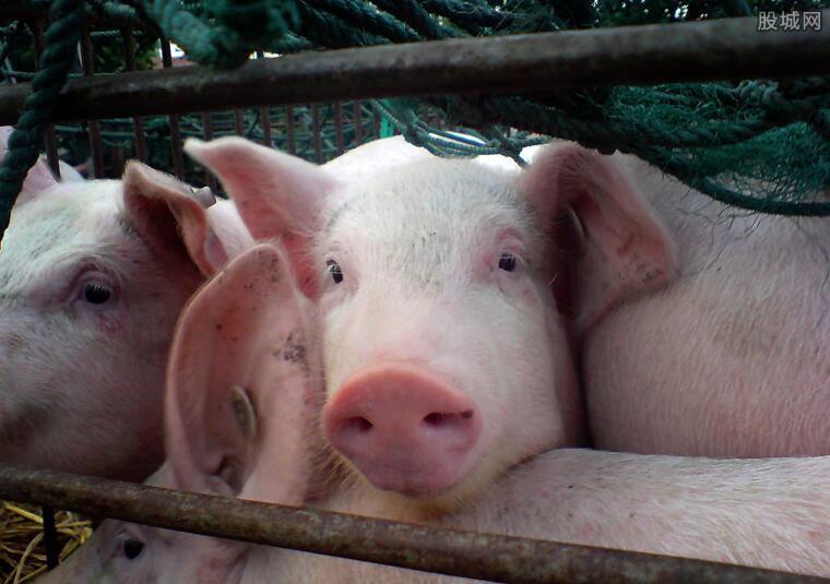 猪肉价格上涨多少