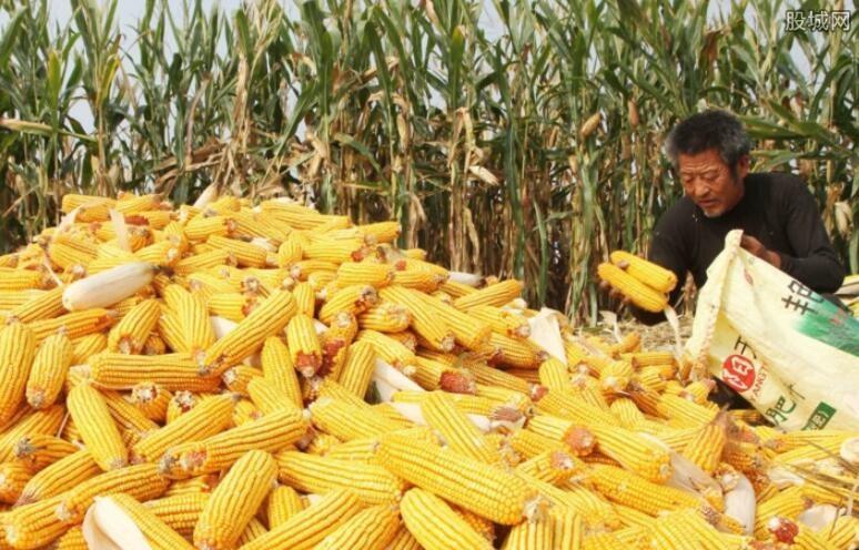 调研玉米供需形势