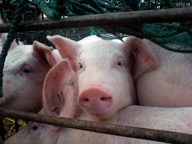 养殖场养猪