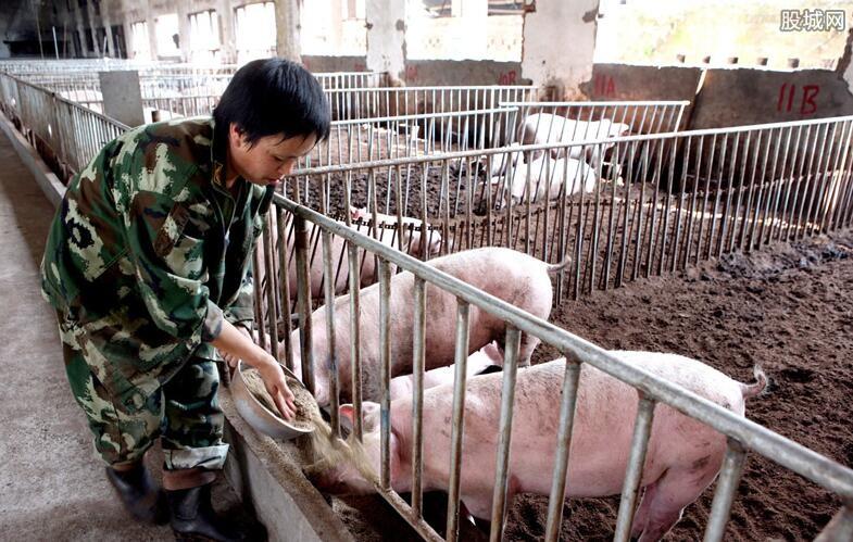 生猪养猪场