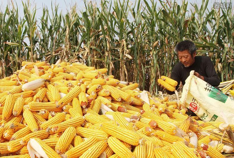 玉米价格稳定