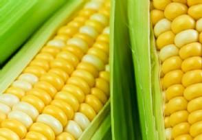 4月份玉米最新价格与走势 玉米今年价格还会涨吗