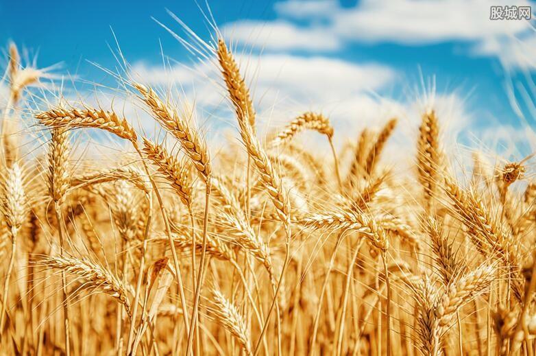 小麦价格或上涨
