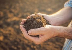 澳计划增加稀土生产 以确保西方国家的稀土供应