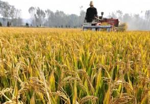 今年粮补下来了吗 今年每亩粮补补贴多少钱?