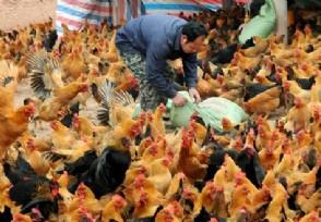 「股票配资平台真的么?」养殖什么不愁销路 养殖行业这几个项目有前景