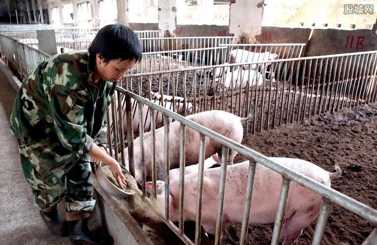 养猪需要的证件