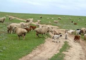 恒大农牧签下进口食品单 进一步优化国人饮食结构