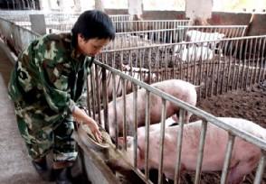 生猪养殖上市公司销售大好 基于前景诱人多家扩产